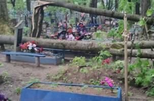 В Велиже ветер завалил кладбище деревьями
