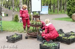 В Смоленске Лопатинский сад украсили цветами