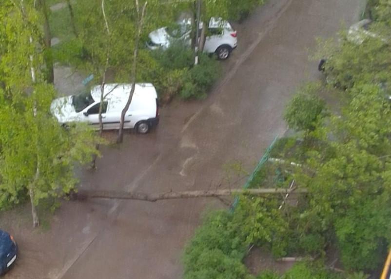 Дерево упало на дорогу на Н-Неман в Смоленске