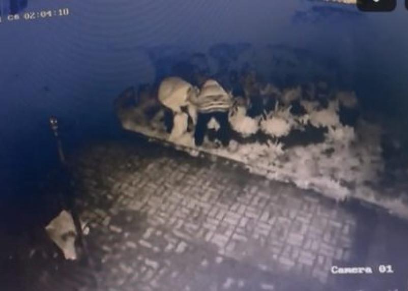Воровки цветов с клумб попали на камеры видеонаблюдения