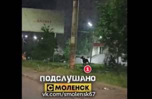 Бегающего по Смоленску лося сняли на видео