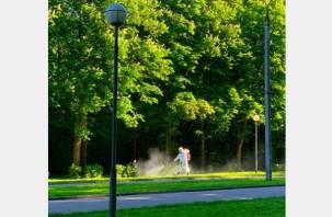 Городские парки Смоленска обрабатывают от клещей