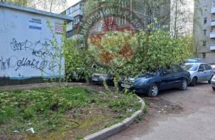 На проспекте Строителей в Смоленске на припаркованные автомобили рухнуло дерево