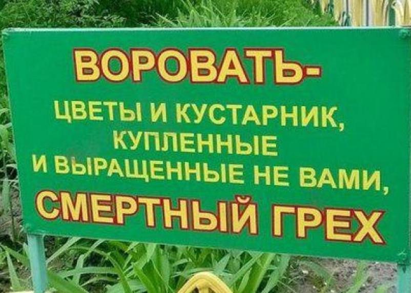 В Смоленске нашли похитителя кустов, высаженных при благоустройстве двора