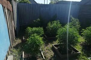 Смолянин выращивал на своем участке коноплю