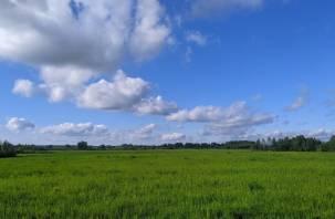 В Смоленской области синоптики обещают похолодание и сильные дожди