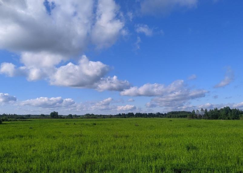 В Смоленской области 1 июля ожидается теплый день