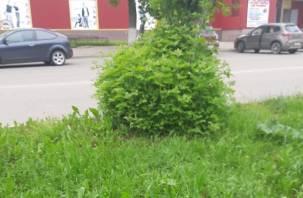 Жители Гагарина в ужасе от озеленения города