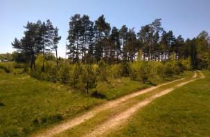 В Смоленской области не зафиксировано ни одного лесного пожара