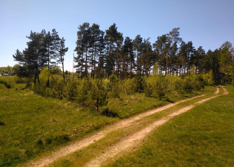 День работников леса отмечают в Смоленской области