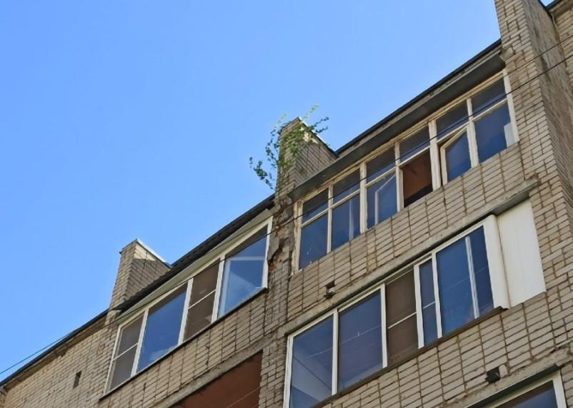Озеленение по-смоленски. Деревья растут на фасадах домов