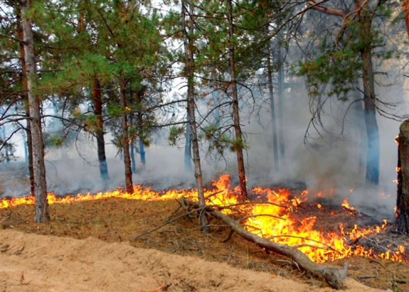 Лесной пожар ликвидировали в Рославльском районе. Теперь там запретят прогулки по лесу