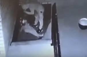 В МВД прокомментировали видео со «психом», который набрасывается на смолянок