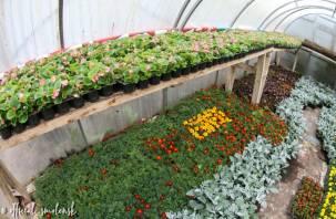 В Смоленске вырастили 100 тысяч растений для городских клумб
