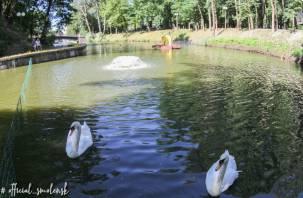 В водоеме Лопатинского сада установили новый домик для лебедей
