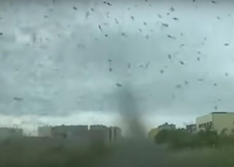 В российском поселке засняли на видео комариный смерч