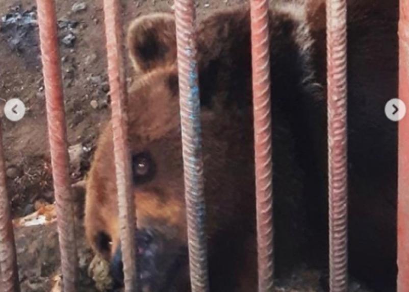 Детки из клетки. Как существуют дикие животные в неволе?