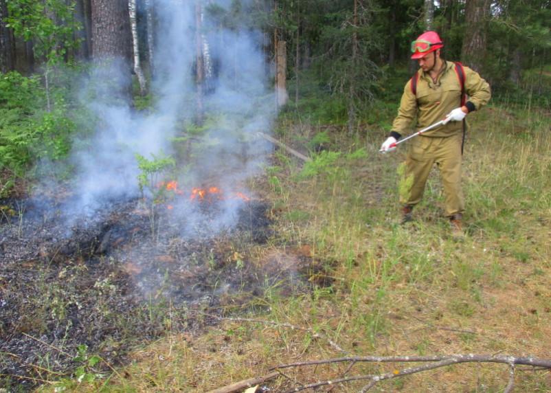 В Ярцевском районе тушили лесной пожар