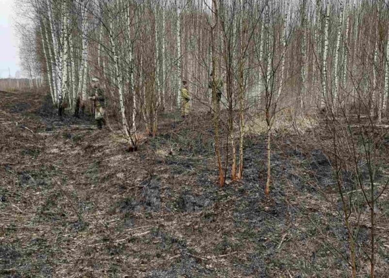 В Рославльском районе тушили лесной пожар