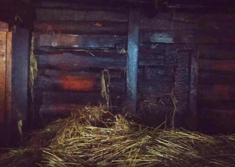 В Смоленске пожарные спасли лошадь, поросенка и трех телят