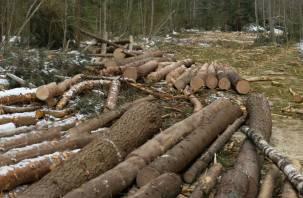 Смоленская область в первой десятке регионов по незаконной рубке леса