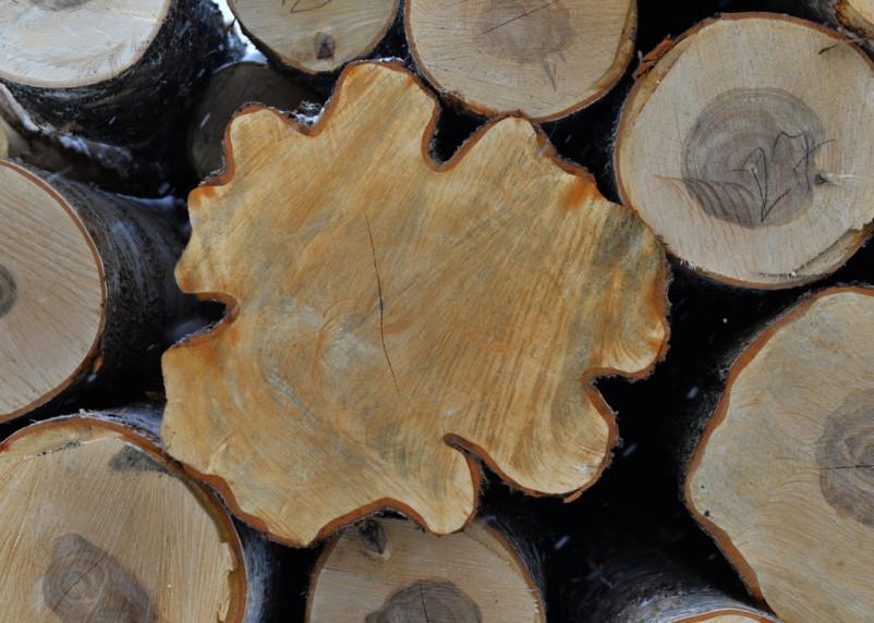 Лес рубят — щепки летят. Почему Смоленщина оказалась в десятке лидеров по незаконной вырубке?