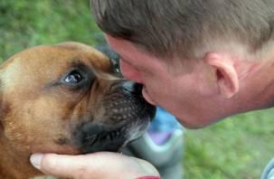 В Смоленск привезли более тысячи собак на Интернациональную выставку. Smolnarod подготовил фоторепортаж