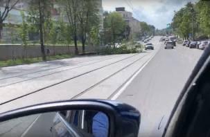 В Смоленске рухнуло дерево на улице Николаева