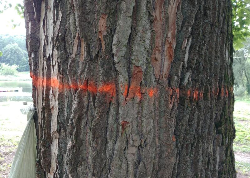 Парк у Солдатского озера на Королевке не оставят без деревьев