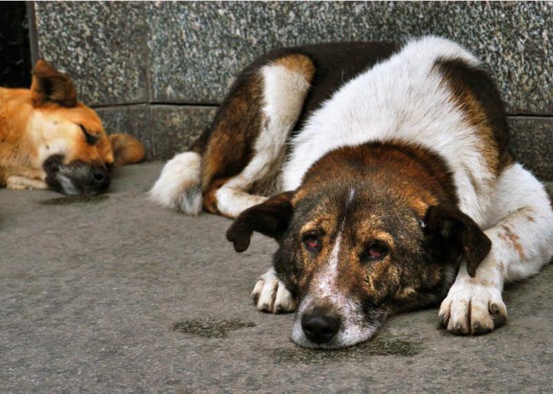Смолянам рассказали, куда сообщать о бездомных животных