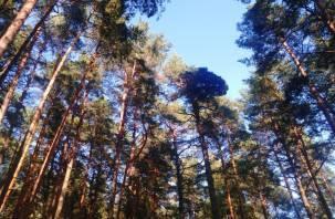 Синоптики рассказали о погоде в Смоленской области 4 августа