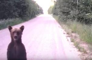 Любопытный мишка попал на видеорегистратор автомобилиста