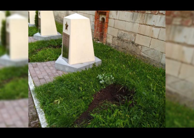 Задержан смолянин, укравший туи из сквера Памяти героев в Смоленске