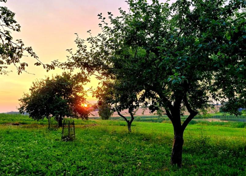 В Смоленской области 15 августа сохранится теплая погода