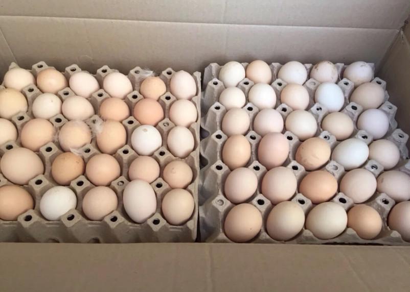 В Россию не пропустили немецкие яйца