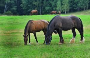 Лошадей-«нелегалов» задержали в Смоленской области
