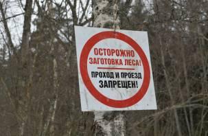 Лес рубить надо, но нельзя. В Смоленской области возникли проблемы с заготовкой древесины