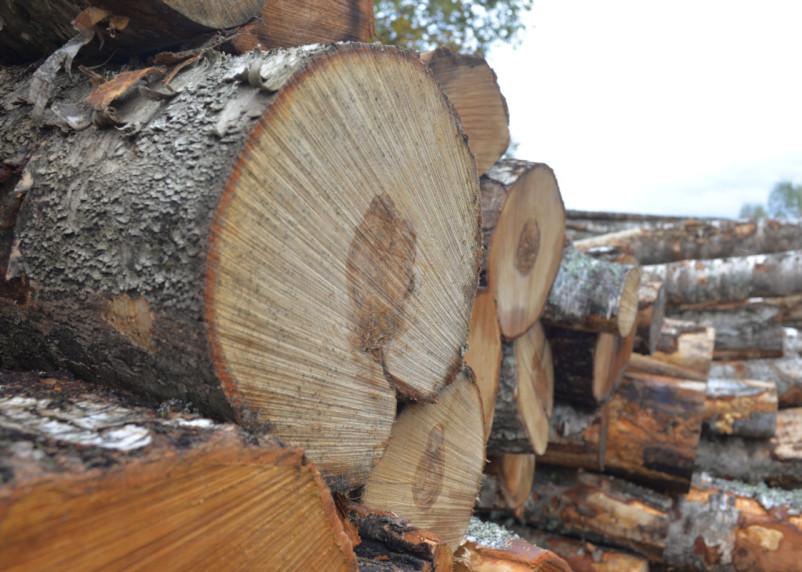 Опять пилят? В Смоленской области обнаружили древесину, готовую к вывозу