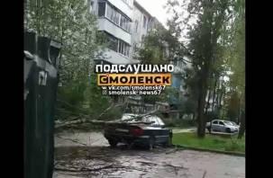 Дерево рухнуло на машину во дворе дома в Смоленске