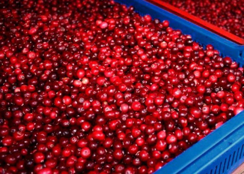 В Смоленской области пресекли попытку ввоза более 430 кг клюквы и малины из Беларуси