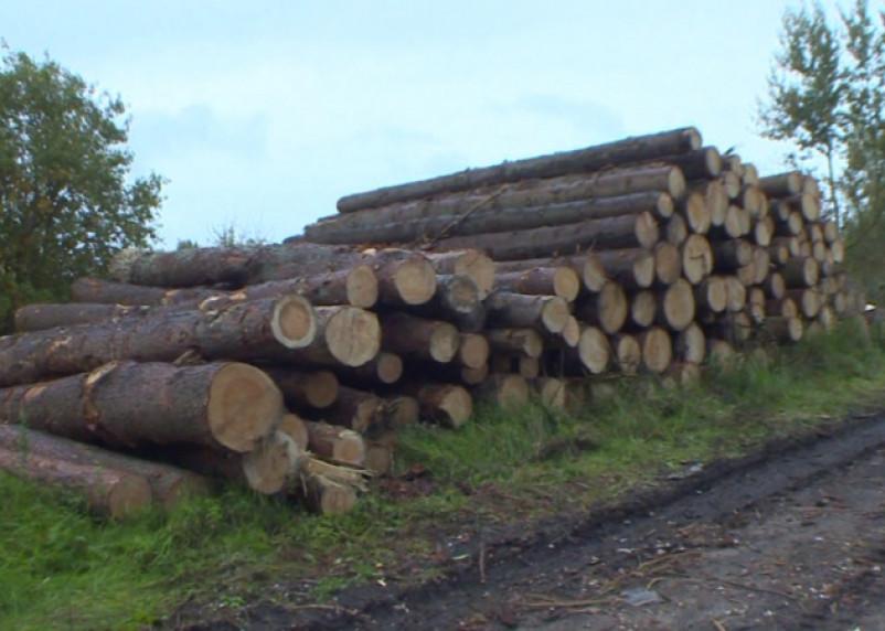 В Рославльском районе вырубили лес на 5 млн рублей
