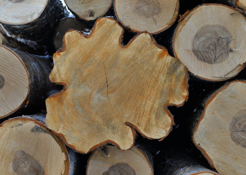 Контрольный спил: в Новодугинском районе начали вывозить спиленный лес