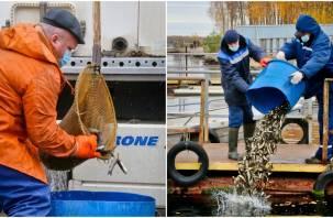 Смоленская АЭС до конца текущего года выпустит в водохранилище свыше 640 тысяч особей рыб