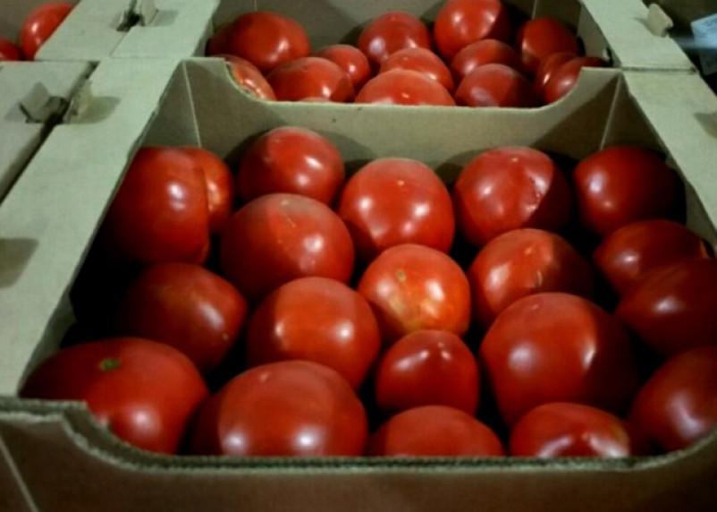 В Смоленской области утилизировали помидоры, нелегально ввезенные из Беларуси