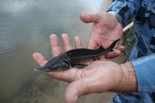 как ловить рыбу в днепре смоленск