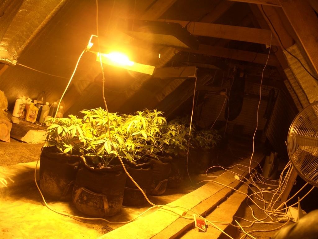 Конопли зимой подвале выращивание в наложенным платежом конопли купить семена
