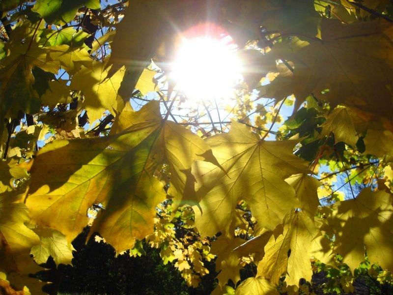 Погода и самочувствие Как мы воспринимаем изменение