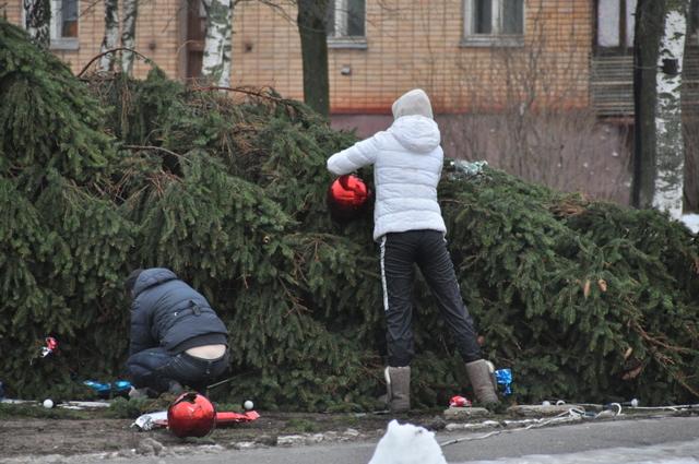 Новогодняя елка смоленск