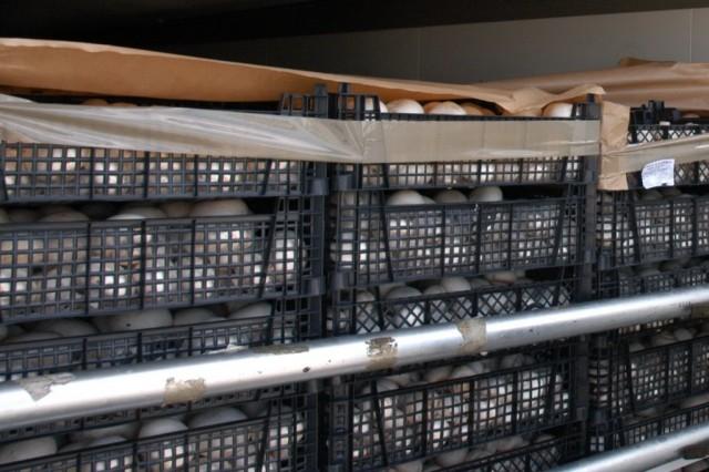 Смоленские пограничники запретили ввоз 50 тонн шампиньонов