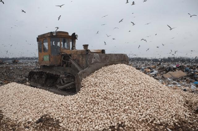 16 тонн грибов уничтожено наполигоне под Смоленском